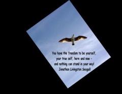 30__520x340_jonathan-livingston-seagull