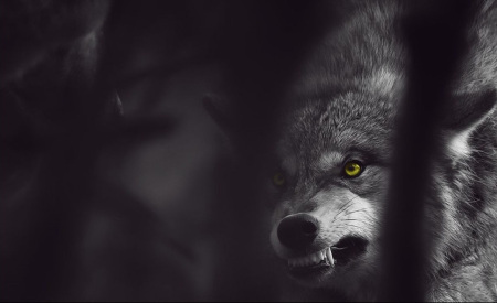angry-wolf-hd-ovpkzot6